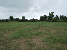 Grass 002 by shiajafari