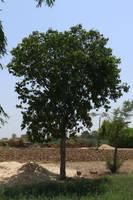 Tree001 by shiajafari