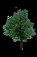 Tree Png by shiajafari