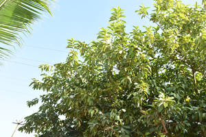 Tree cut 001 by shiajafari