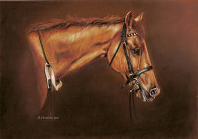 Study of a Tb 'Pointer' by Stephanie-Greaves