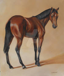 Thoroughbred yearling, Study