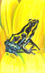 Amazon Poison Dart Frog by mrinx