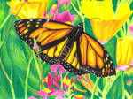 Crayola Monarch Butterfly