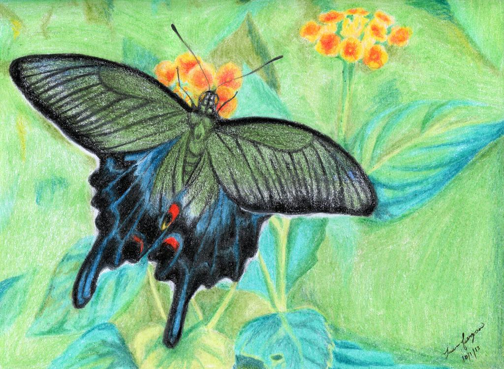 Japanese Swallowtail B...