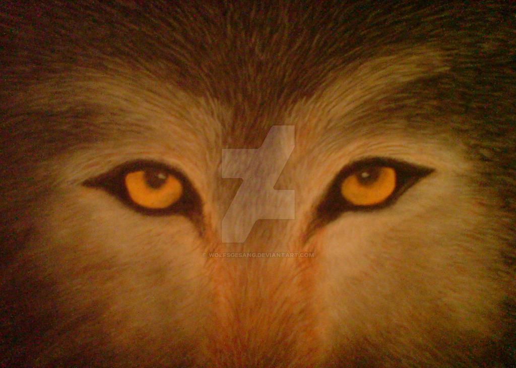 Wolfs Eyes by WolfsGesang