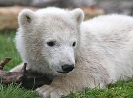 That bear look by JaneFox