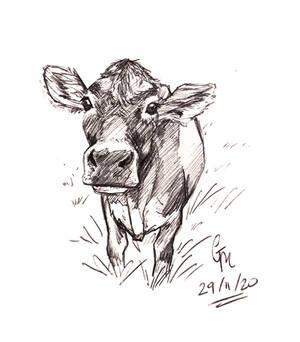 Calf Sketch