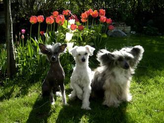 Three Dogs by ValentineXXX