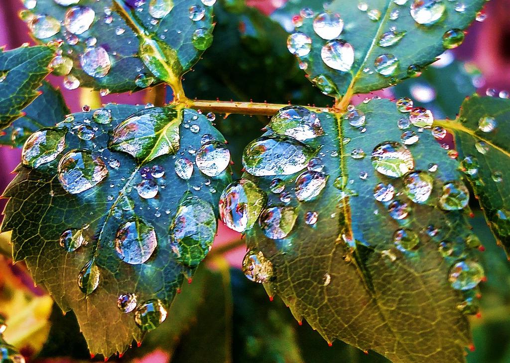 Rain Light by smokedragon