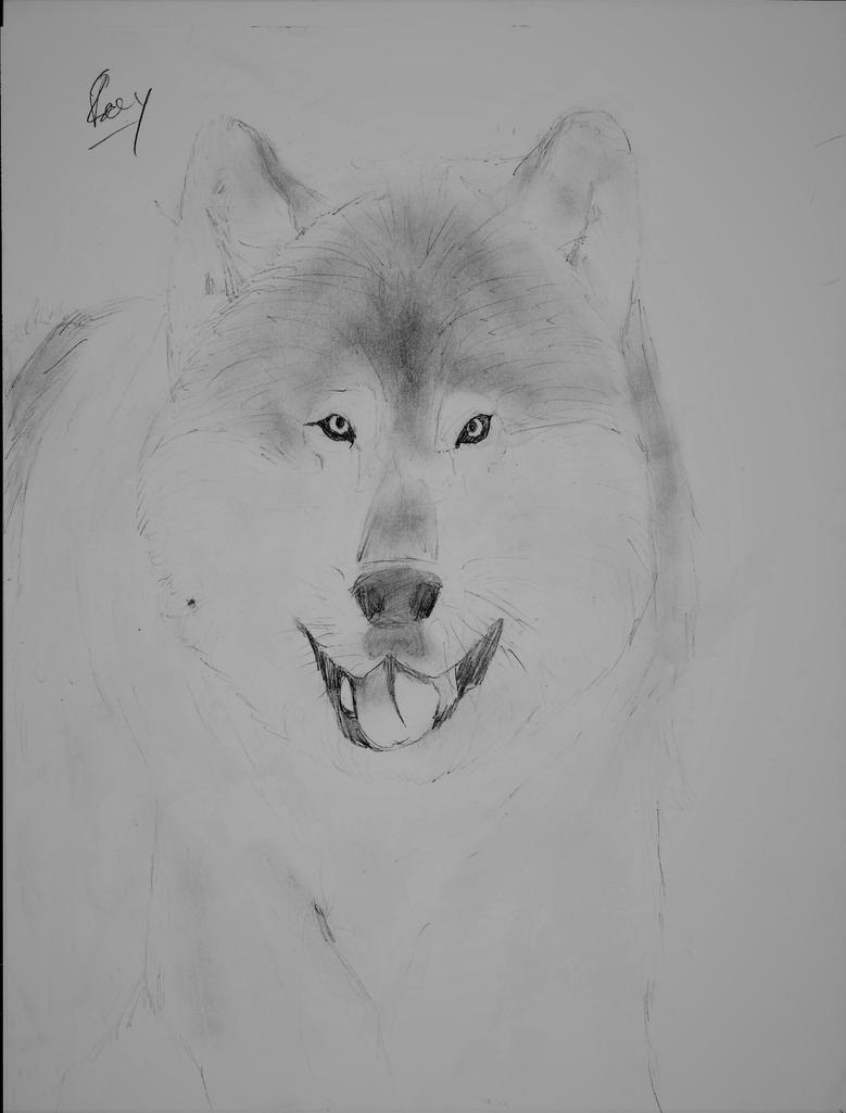 Realistic Wolf by Canine--Artist