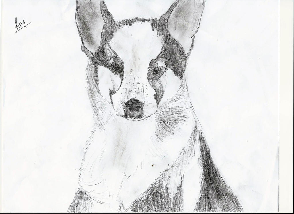 Panda German Shepherd Puppy by Canine--Artist