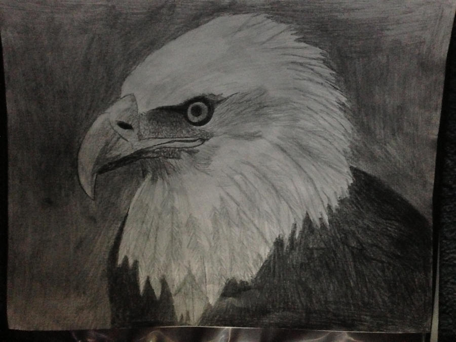 Bald Eagle by Soaringeagle78