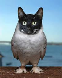 Cat Corija by isabelmitchell