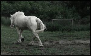 horse by bazio