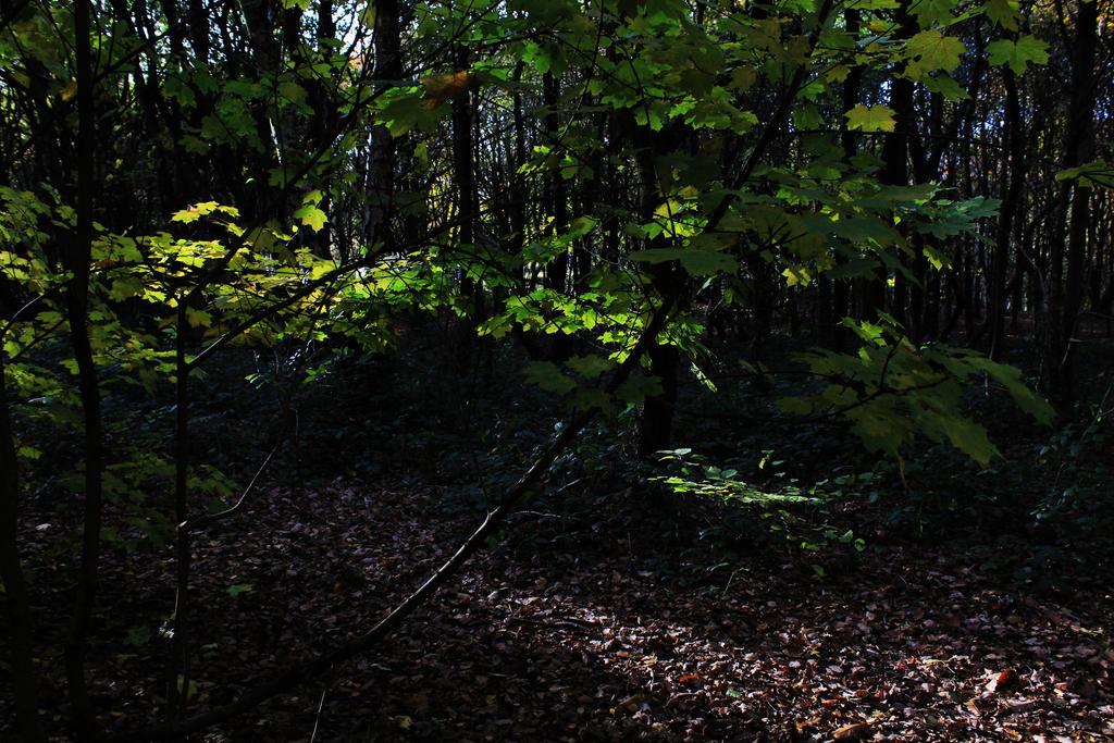 Leaves by elliottisanotter