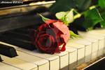 Piano N' Roses