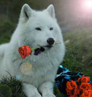 The Wolf With the Red Roses