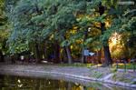 Park in golden light
