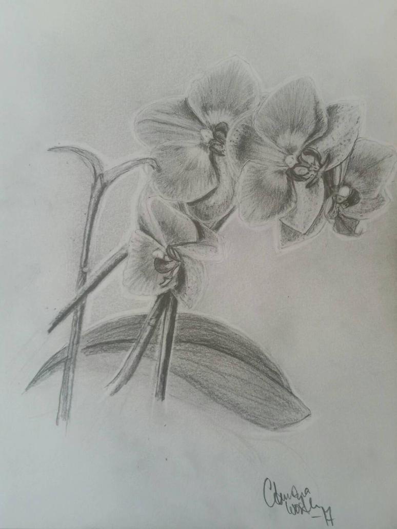 orchid  by tonez1