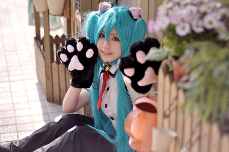 Hatsune Miku Project DIVA-CAT by nozomiwang
