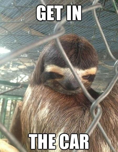Funny sloth rape