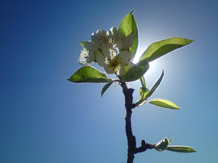 Spring? by Harvy355