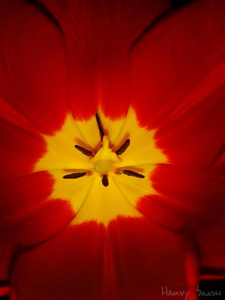 Flower by Harvy355