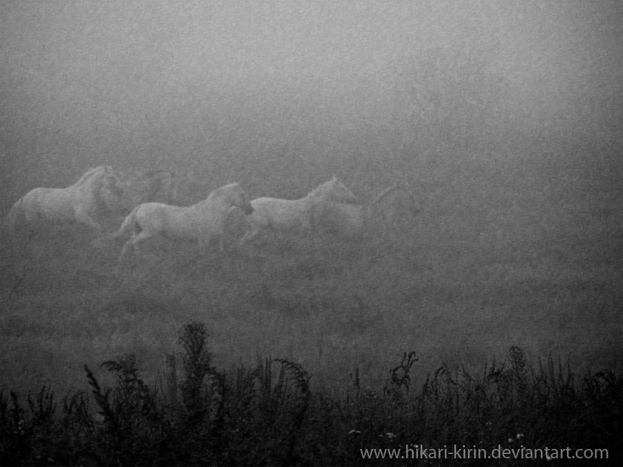 Gay horse in the fog by Hikari-kirin