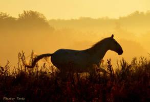 When the sun rise by Hikari-kirin