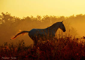 Yellow lights of morning by Hikari-kirin