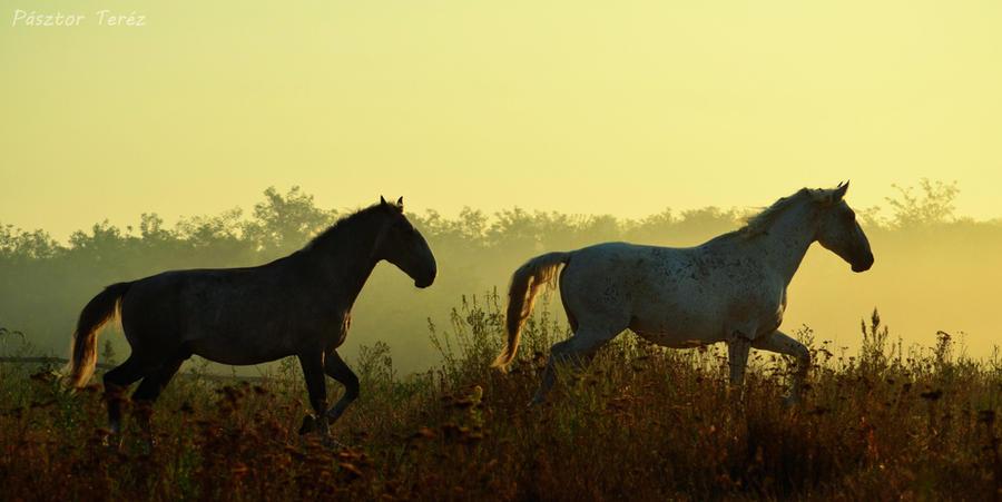 Early morning by Hikari-kirin