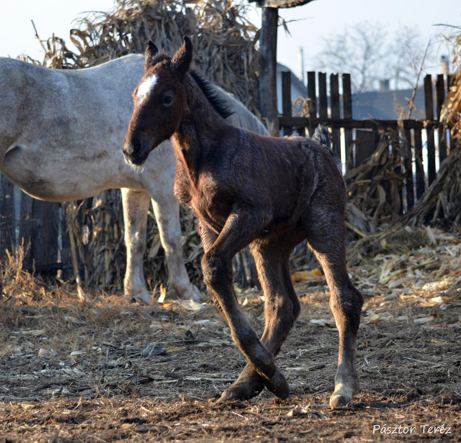 Foal- Stock 01 by Hikari-kirin