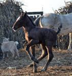 Foal- Stock 02 by Hikari-kirin