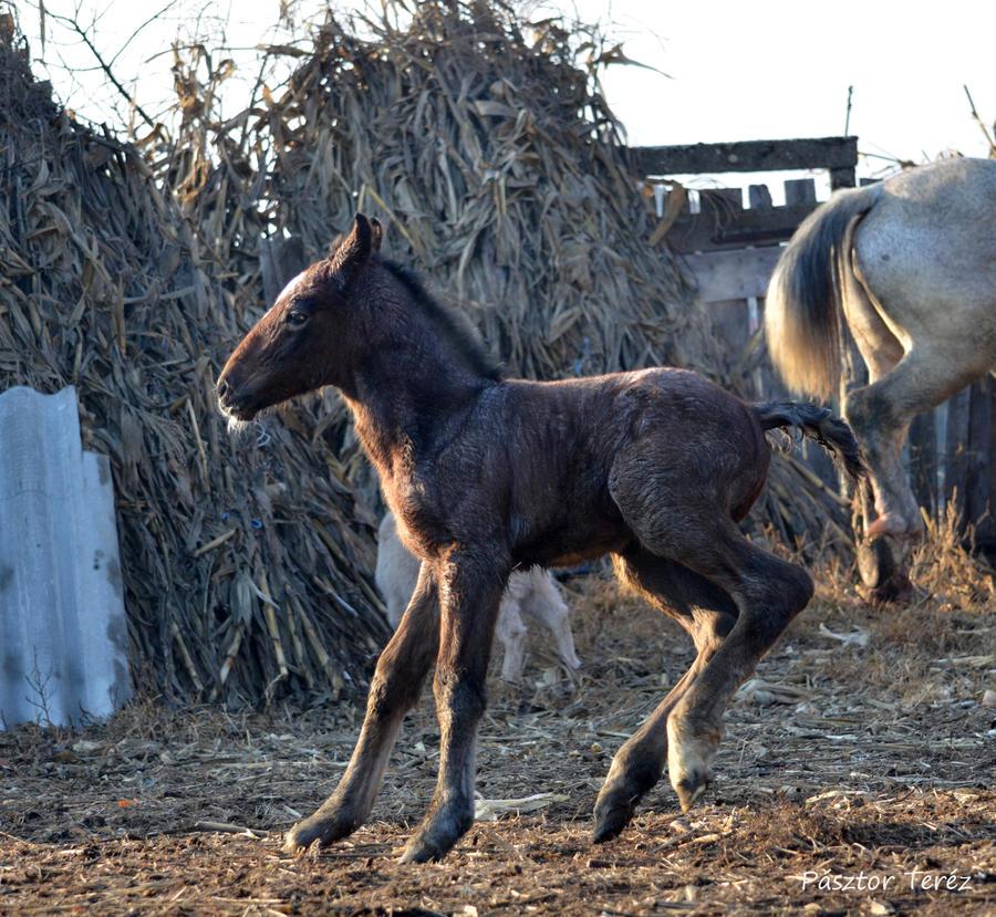 Foal- Stock 03 by Hikari-kirin
