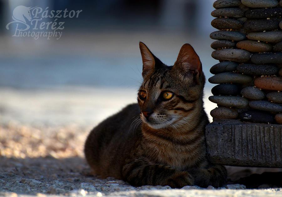 Elegant cat by Hikari-kirin
