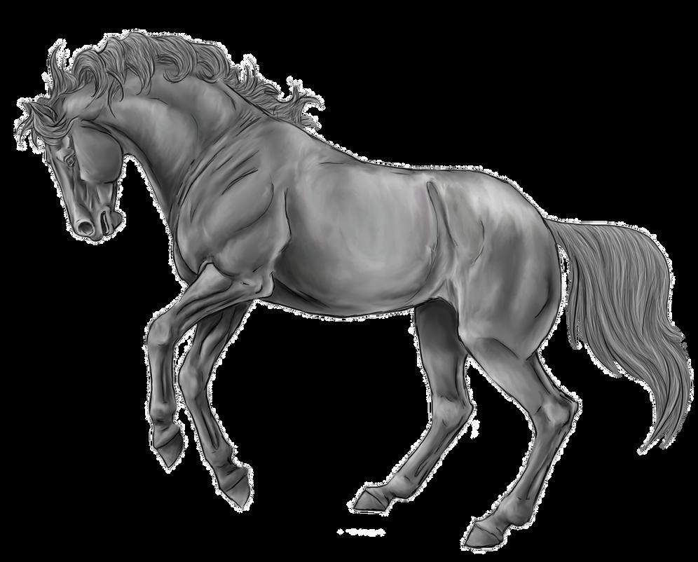 Line Drawing Of Horse : Rearing horse line art by xxkincadesvanityxx greys