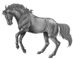 Rearing Horse Line Art By Xxkincadesvanityxx-greys