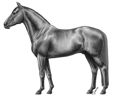 Warmblood Lineart By Jiphorse Greyscale by AquaSalt