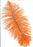 Orange Feather - Atari