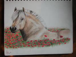 Fjord horse by drinkerofthewind