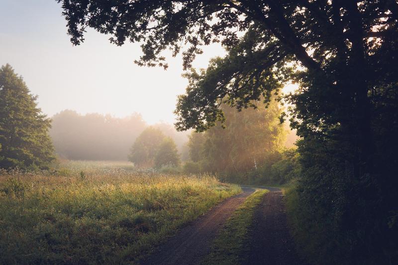 The Morning XXII by Freggoboy
