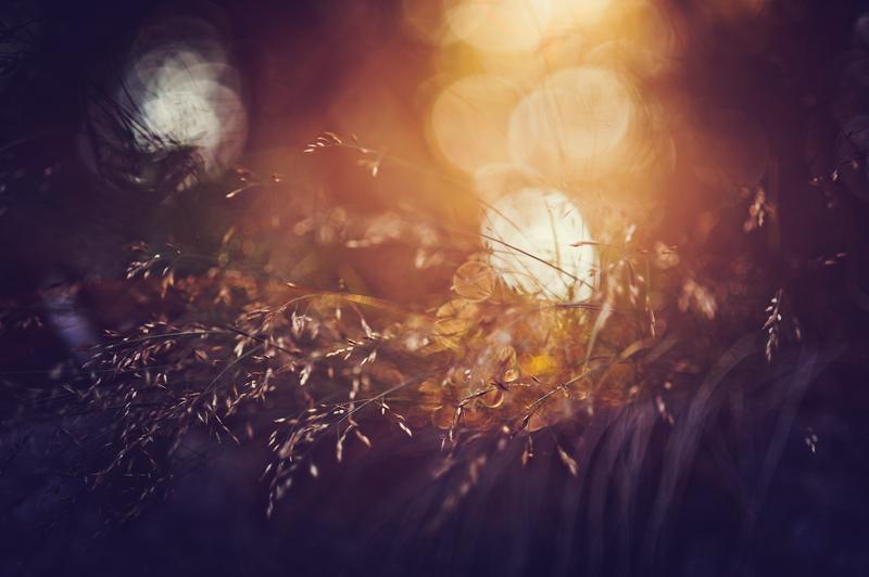Sunstruck by Freggoboy