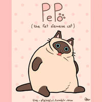 Pepo! the fat siamese cat! by the-staingirl