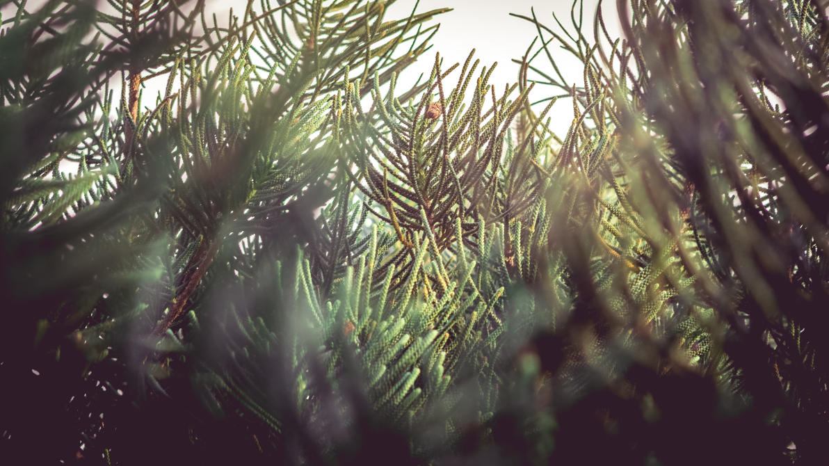 Pine Leaves - Wallpaper by FavsCo