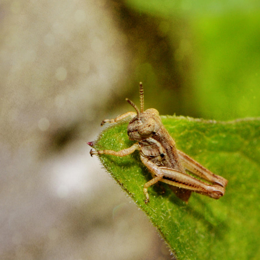 Grasshopper Landing by Catandhearts