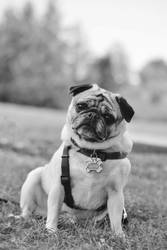 Sophie Pugalina Wrinkles by Catandhearts