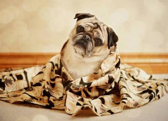 Pug Snuggles by Catandhearts