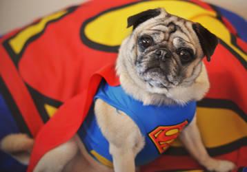 Super Pug by Catandhearts