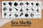Sea Shells Free PS Brushes